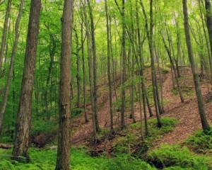 Public, private partners celebrate acreage addition to Pennsylvania's newest national wildlife refuge